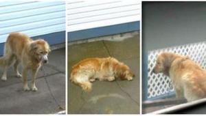 Niemand durfde de hond te helpen die mishandeld werd door zijn eigenaar, maar to