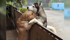 De hond loopt weg van huis en haast zich naar zijn vriend. Als de dieren eindeli