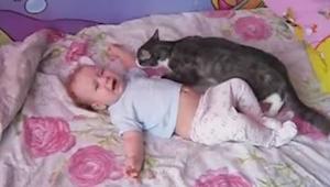 De baby begint te huilen - de reactie van deze kat zal je verrassen!