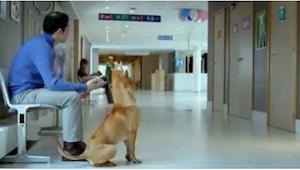 De hond en zijn baasje in het ziekenhuis wachten geduldig aan de deur van de be