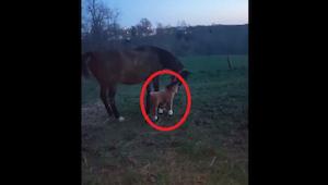 Het paard vond zijn knuffeldier niet zo.... wel... ze dacht er het hare van !