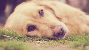 Een nieuwe manier om honden te vergiftigen heeft al vier huisdieren vermoord. Le