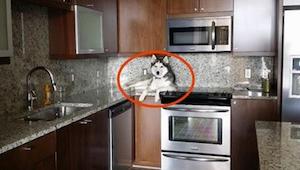 De eigenaar merkte op dat zijn hond zich vreemd gedroeg. Toen hij goed naar hem
