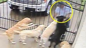De bewakingscamara toonde wat de postbode doet tijdens zijn ronde met deze honde