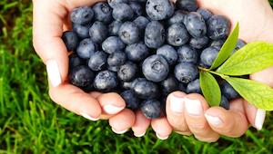 5 redenen waarom blauwbessen je favoriete fruit zou moeten zijn.
