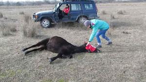 De man bevrijd het paard. De reactie van het dier heeft de harten van internetge