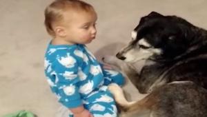 De jongen wou de hond knuffelen, maar de vermoeidheid was groter.