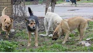 Hij hoorde een vreemd geluid, en zag dan vier honden en wat ze wilden beschermen