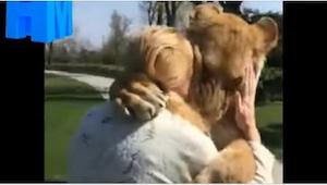 Deze vrouw zorgde voor leeuwen, maar ze moest ze terugkeren naar de dierentuin.