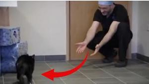 Oscar gedraagt zich als een normale kat, maar kijk maar naar hem als hij op alle
