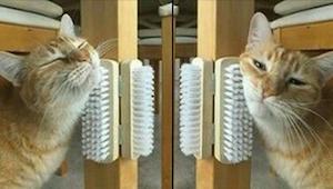 Als je kat zich steendood verveelt, zijn dit 9 tips die je kunnen helpen!