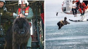 Deze hond springt uit een helikopter in ijskoud water om drenkelingen te redden.