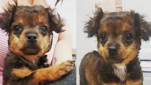 Deze puppy werd naar de dierenkliniek gebracht om te laten inslapen. Toen de dok