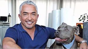 Waarom schreeuwt Cesar Millan nooit op zijn honden? Bekijk wat de hondenkenner a