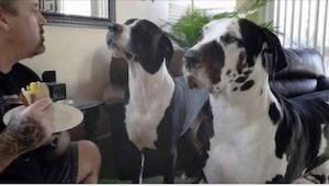 Hij laat zijn hond weten dat hij de sandwich niet krijgt... Zijn reactie is schi