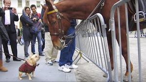 Een hond was super gelukkig toen een paard hem uiteindelijk wat aandacht gaf - j