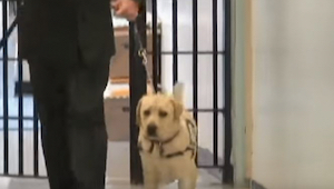 Een soldaat gaat naar de gevangenis met zijn hond. Kijk hoe de hond reageert als
