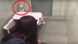 Een angstige hond verstopt zich in de hoek, maar zodra ze ziet wat een vrijwilli