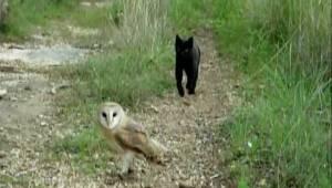 Een kat naderde een uil. Wat hij vervolgens deed, verraste miljoenen mensen!