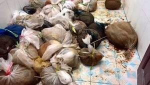 Douaniers hoorden angstaanjagende geluiden uit plastic tassen komen. Zo ontdekte