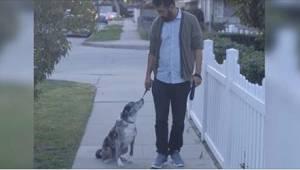 Een man adopteerde een oude, in de steek gelaten hond. Op een zekere dag houdt d