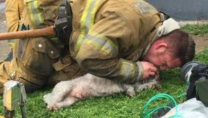 Een brandweerman besloot alles te doen om het leven te redden van een hond die u