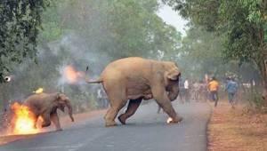 Een vreselijke foto toont een vrouwtjesolifant die met haar jongen vlucht voor e