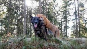 Zijn hond verdween iedere dag het bos in. Toen zijn baasje eindelijk ontdekte wi