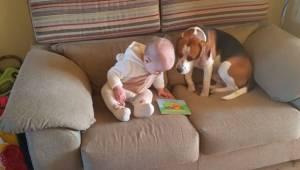 Ouders besloten te filmen hoe hun dochtertje speelt met hun hond. Die video is d