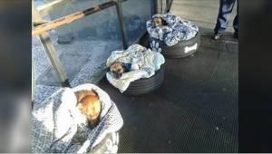Een busstation opende zijn deuren voor dakloze honden. Bekijk hun reactie wannee