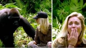 Hij redde twee gorilla's. 6 jaar later kwam hij ze bekijken met zijn nieuwe vrou