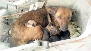 Een dakloze hond ontfermde zich over een achtergelaten baby. Honden hebben een g