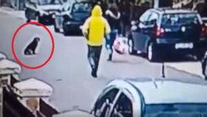 Een verdachte man viel een vrouw aan van achteren. De video van hoe haar hond ha