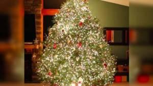 Zo'n bijzondere kerstboom heb je nog nooit gezien!