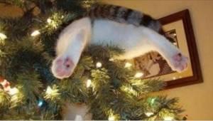 Deze katten snappen het kerstboomverbod niet! Bekijk deze grappige video.