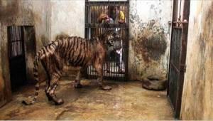 De dierentuin des doods. Hier sterven dieren gegarandeerd van de honger!