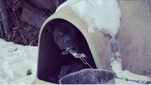Vrijwilligers hadden tranen in hun ogen toen ze deze hond zagen... En zijn baasj