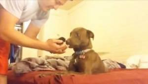 Je smelt wanneer je ziet hoe deze pitbull op een klein katje reageerde!