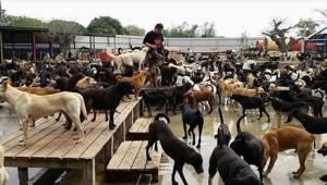 In dit asiel zijn honden gewoonweg gelukkig... Kom erachter waarom.