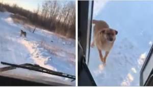 Een buschauffer stopt iedere dag bij een extra halte, waar een hongerige hond he