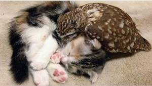 Hij verzorgde een uil en nam voor zijn gezelschap ook een kat. Bekijk de schatti
