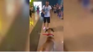 Een hond wachtte op zijn baasje op het vliegveld. Zijn reactie op het zien van d