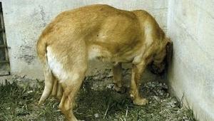 Als je hond zich zo begint te gedragen, onderschat de situatie dan niet maar bre