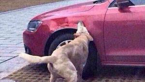 De hond werd aangereden door een bestuurder van de auto en hij besloot om wraak