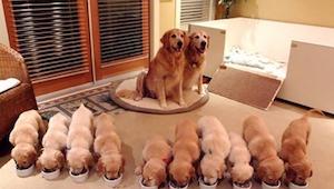 Zie de 15 liefste hondenfoto's en hun kinderen. Nummer 11 is superlief!