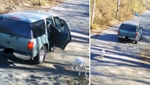 Hij heeft de hond uit zijn auto gezet en hem achtergelaten… Maar wat er daarna g