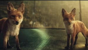 De vossen gingen de trampoline op. Toen ik de afloop zag, kon ik niet meer ophou