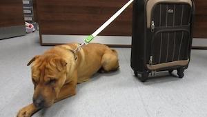 Een hond werd achtergelaten op het station samen met een koffertje. Je gelooft n