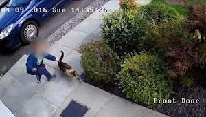 Een camera filmde hoe de zoon van de buren hun kat mishandelde. Gelukkig is er k