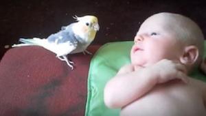Ouders waren bang voor de confrontatie tussen hun papegaai en hun pasgeboren kin